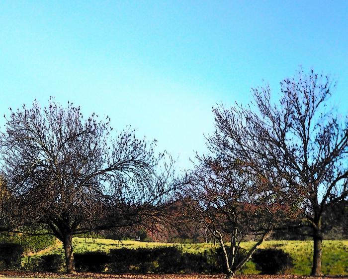 Stick Trees